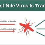 West Nile Virus Warning